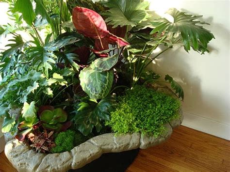 beautiful indoor plants indoor plants simple and beautiful garden park