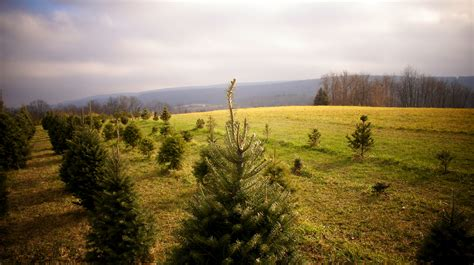 best 28 smith christmas tree farm harrisburg 100