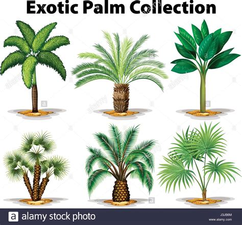 different types of trees different types of palm trees illustration stock