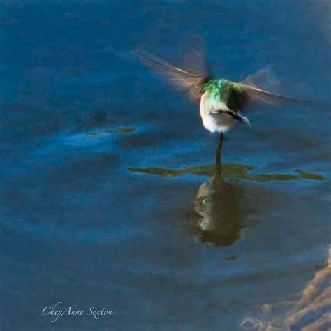 dancing hummingbird drinking water jewel tone green