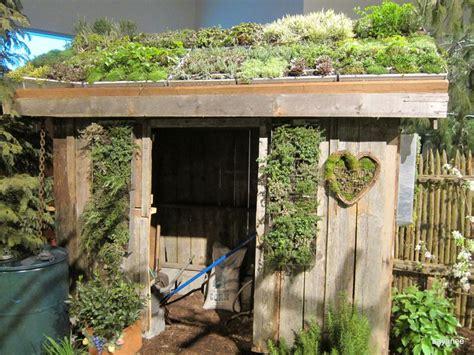 plants on green roof shed ideas for green wall