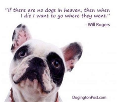 No More Dying Then quotes about dogs in heaven quotesgram