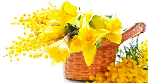 foto mimosa fiore yellow flowers 7326 1920 x 1080 wallpaperlayer