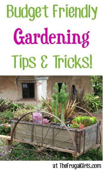Vegetable Garden Tips And Tricks 536 Best Gardening Tips Tricks Clever Ideas Images On