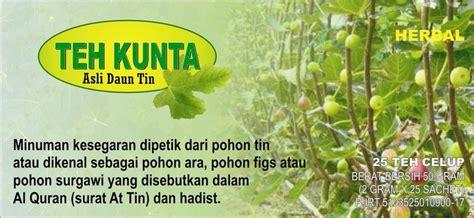 Bibit Pohon Buah Tin Produksi Budidaya Buah Tin Indonesia Pusat Budidaya Tanaman Pohon Tin Perumahan Banjarsari