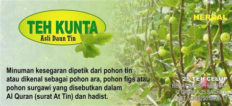 Bibit Buah Tin Gresik produksi budidaya buah tin indonesia pusat budidaya