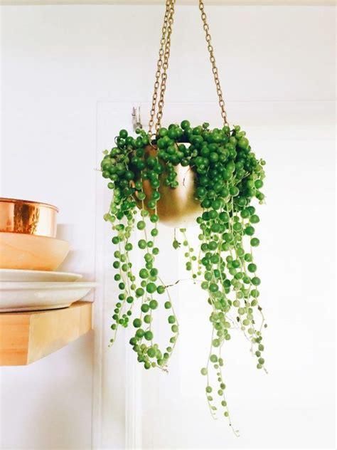 indoor house plants for sale 25 best indoor cactus ideas on pinterest cactus cactus plants and kitchen plants