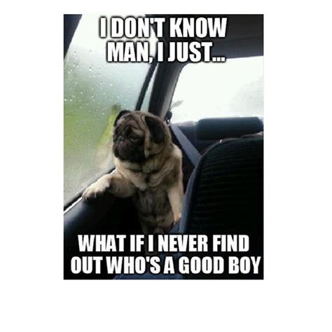 Pet Meme - 45 funny dog memes dogtime