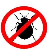 bed bug extermination process bed bug treatment in las vegas senske pest control