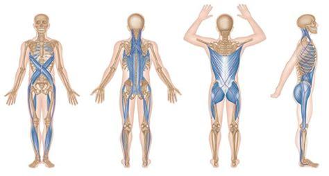 cadenas musculares thomas myers pdf las cadenas miofasciales y su papel en la terapia