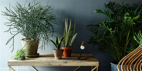 plants for the house 5 no kill houseplants for any home huffpost