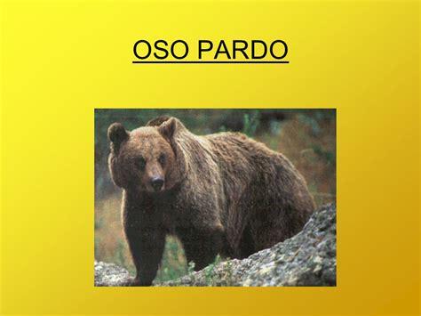 oso pardo oso pardo 0805069011 oso pardo ppt descargar
