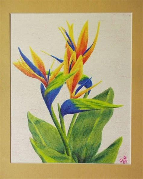 sfa colors sfa original 8x10 colored pencil drawing bird of paradise
