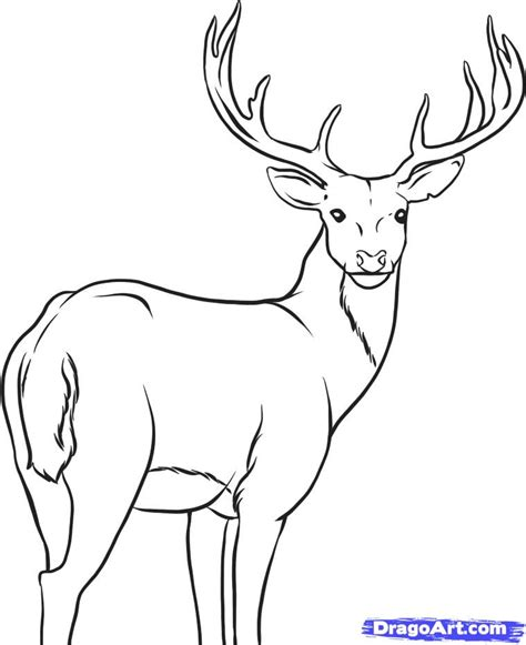 cartoon deer coloring pages how to draw a deer step by step forest animals animals