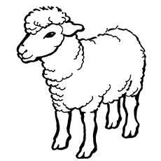 big sheep coloring page coloring page of sheep a sheep a coloring big vitlt com