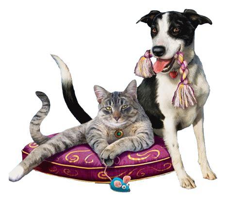 imagenes que se mueven gatos gatos animados gif con movimiento
