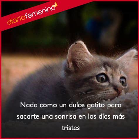 imagenes de gatos sin frases frases para amar a los gatos te sacan sonrisas