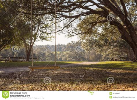 swing for tree branch swing hanging from tree branch stock photo image 50399340