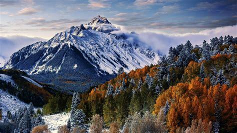 wallpaper sneffels mountain trees winter forest