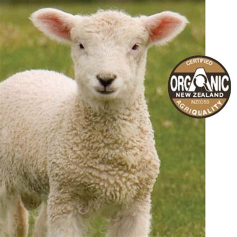 White Cloud Trading Health Boosting Wool Duvets by Don T Count Sheep To Sleep In Peace Just Use Wool