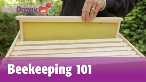 25 best ideas about beekeeping for beginners on