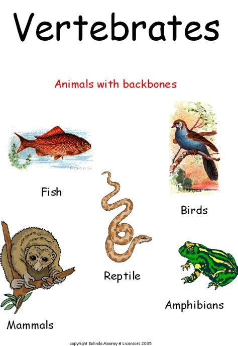 djabrikz hewan invertebrata  vertebrata
