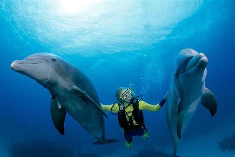 mesmerizing photos these mesmerizing photos of bahamas will make you put this
