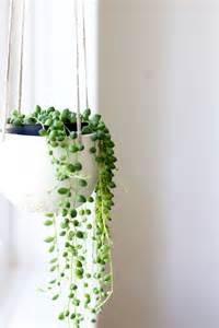 In Door Plant Put In Pot Vide by Best 25 Indoor Plant Decor Ideas On Pinterest Plant