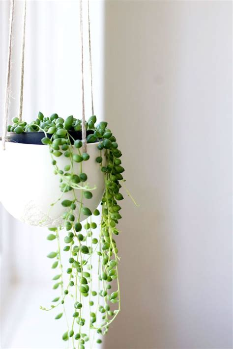 hanging plants 25 best ideas about indoor plant decor on