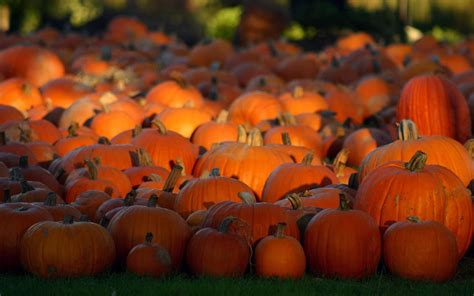 pumpkin background wallpapers pumpkin wallpapers