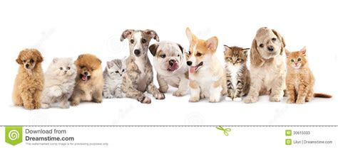Puppies And Kittens Stock Photos   Image: 30615033