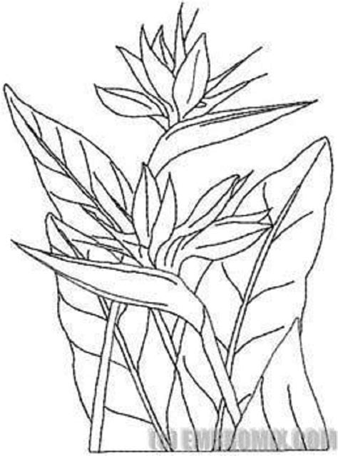 coloring pages bird of paradise bird of paradise flower colouring pages picolour