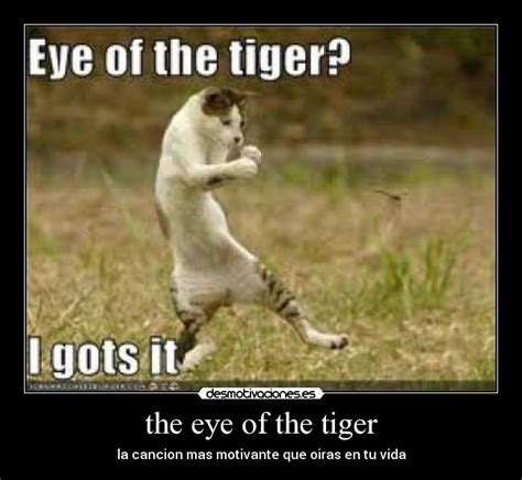 Eye Of The Tiger Meme - tiger tiger memes