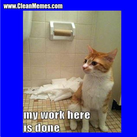 Working Cat Meme - funny cat meme work pictures to pin on pinterest pinsdaddy