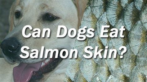 can dogs eat salmon skin can i give my salmon skin pet consider