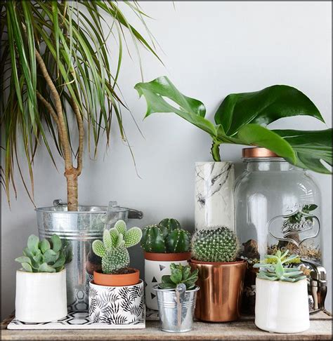plante verte pour chambre 1000 id 233 es sur le th 232 me terrarium pour plantes grasses sur