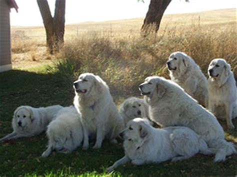 puppy delivery service pet movers pet delivery service transport pet autos post