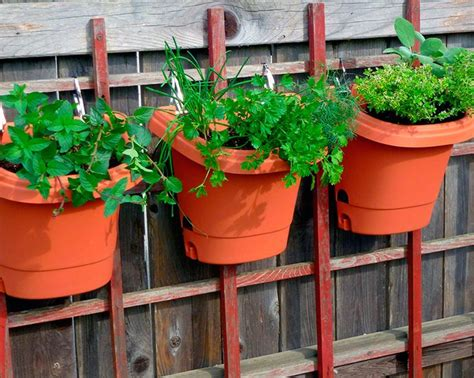 best 25 vertical herb gardens ideas on wall