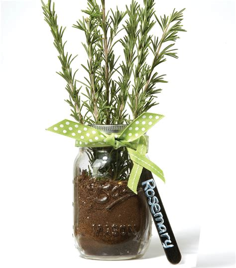 Jar Herb Planter by Jar Herb Planter Joann Jo