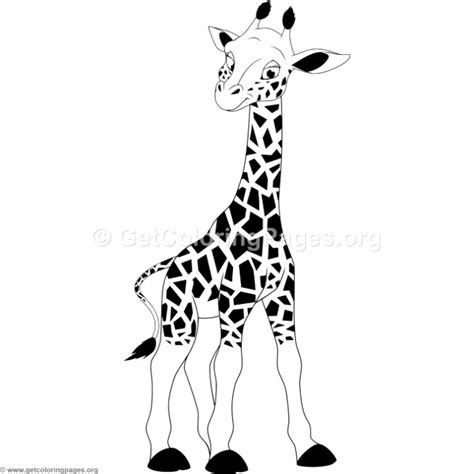 Baby Giraffe Cartoon Black And White Kichijoji Eikaiwa Info