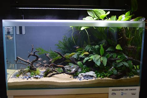 aga aquascaping aquascaping live 2016 large tank entries results