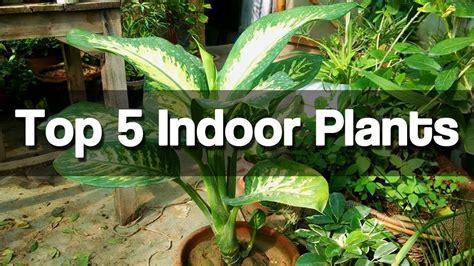 top   indoor plants easy  grow indoor plants