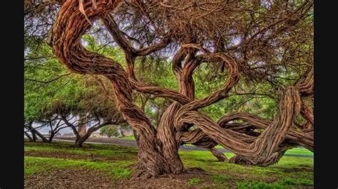 most amazing trees amazing the most beautiful trees in the world