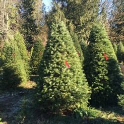 best christmas tree farms in washington state enchanted winds tree farm trees 18021 issaquah hobart rd se issaquah