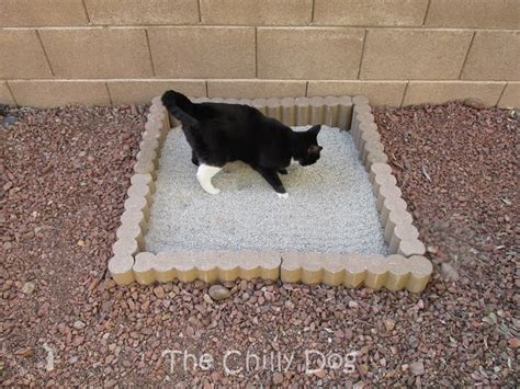 cat using bathroom outside litter box tutorial outdoor cat litter box the chilly dog