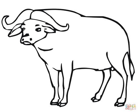 african buffalo coloring online