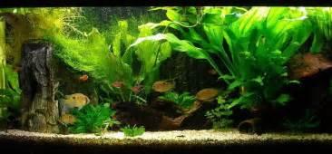Table, Fish Aquarium, Decorating Ideas, Living Room, Aquarium Ideas