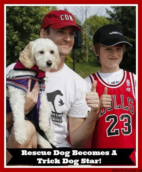 mercy puppy rescue do you the most talented trick dogs in the world talent hounds