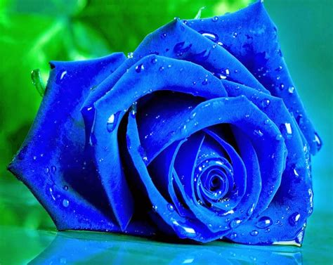 dynamic views dynamic views 3d water drop flower nature pictures nature
