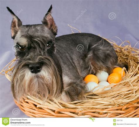 puppy eggs the hatches out eggs stock photography image 2257732